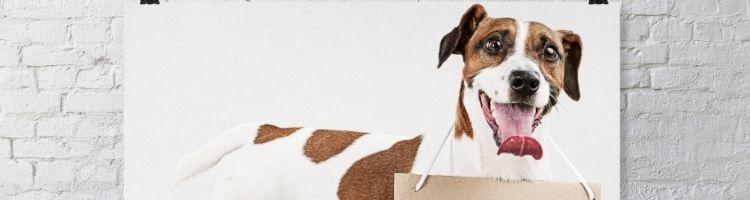 Poster med hund